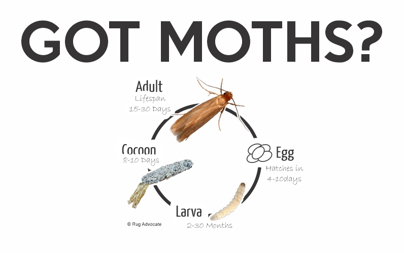 Moth Lifecycle